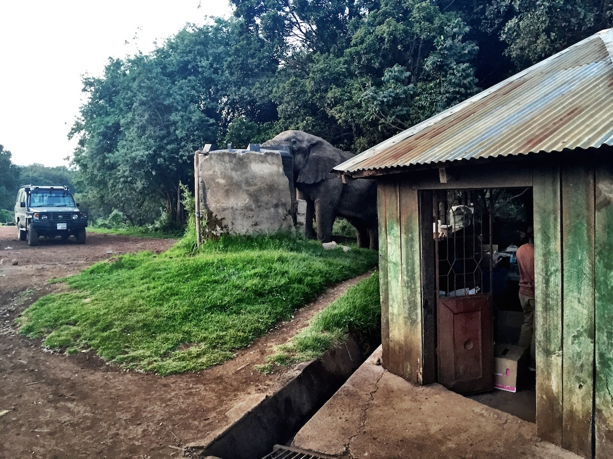 The elephant steals our shower water