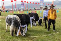 Yaks, monks and festive people
