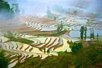China. Rice Terraces in bad weather