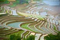 Rice Terraces in bad weather