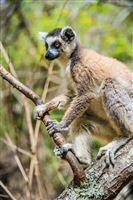Small and even smaller animals of Madagascar