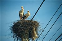 Every village their own storks