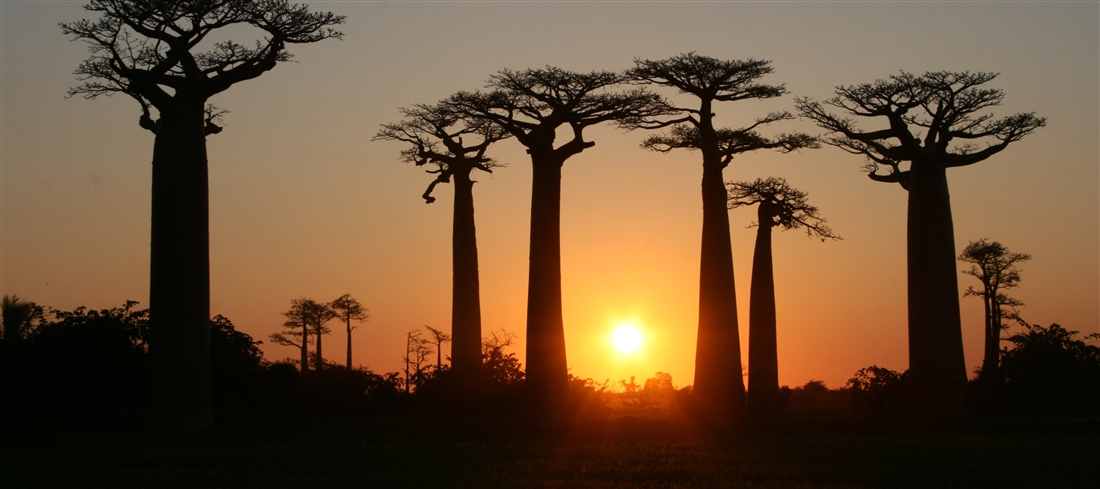 Madagascar, Baobab country